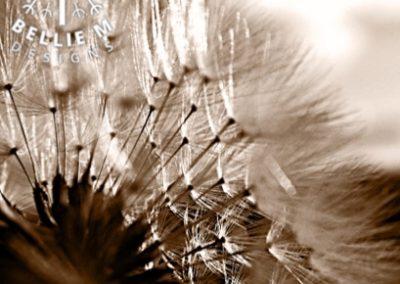 Seedhead 11